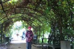 Виноградная аллея