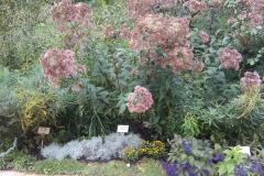 Растения на центральной аллее